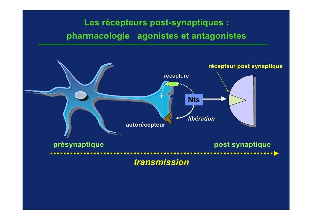 Les récepteurs post-synaptiques :   pharmacologie agonistes et antagonistes                                           réce...