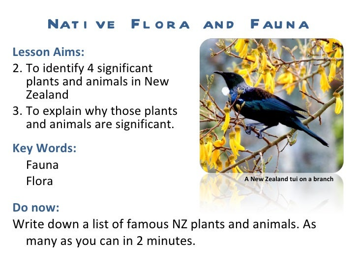 Native Flora and Fauna <ul><li>Lesson Aims: </li></ul><ul><li>To identify 4 significant plants and animals in New Zealand ...