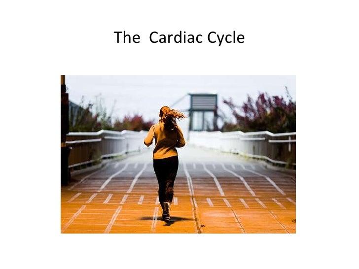 The  Cardiac Cycle<br />