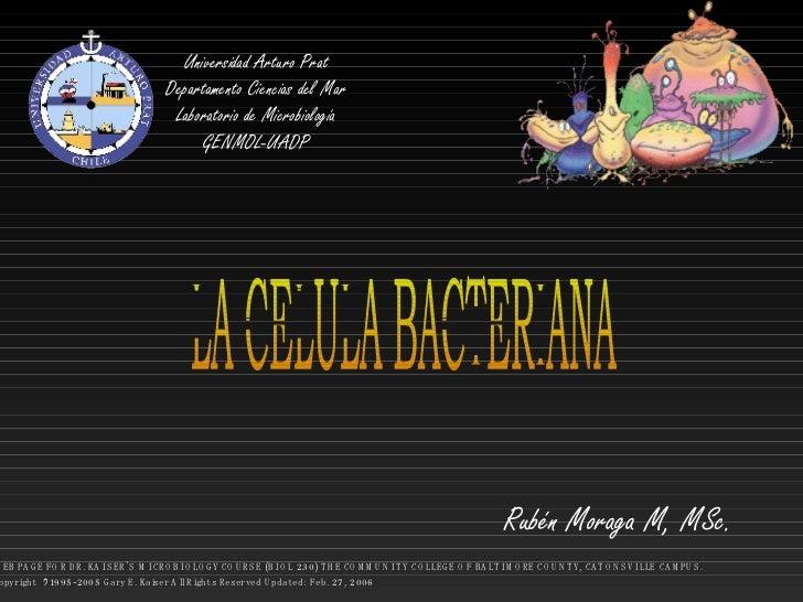 Universidad Arturo Prat Departamento Ciencias del Mar Laboratorio de Microbiología GENMOL-UADP LA CELULA BACTERIANA Rubén ...