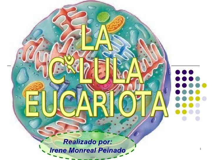 Realizado por: Irene Monreal Peinado LA CÉLULA EUCARIOTA