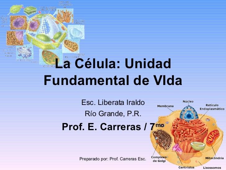 La Célula: Unidad Fundamental de VIda Esc. Liberata Iraldo Río Grande, P.R. Prof. E. Carreras / 7 mo