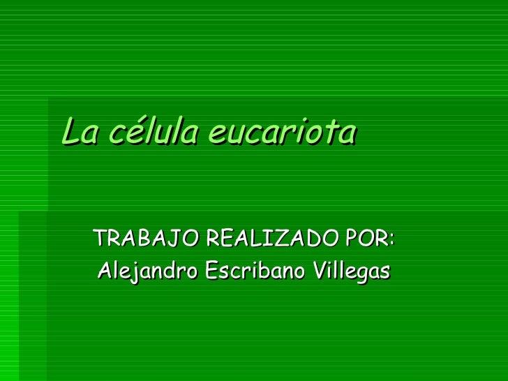 La célula   eucariota TRABAJO REALIZADO POR: Alejandro Escribano Villegas