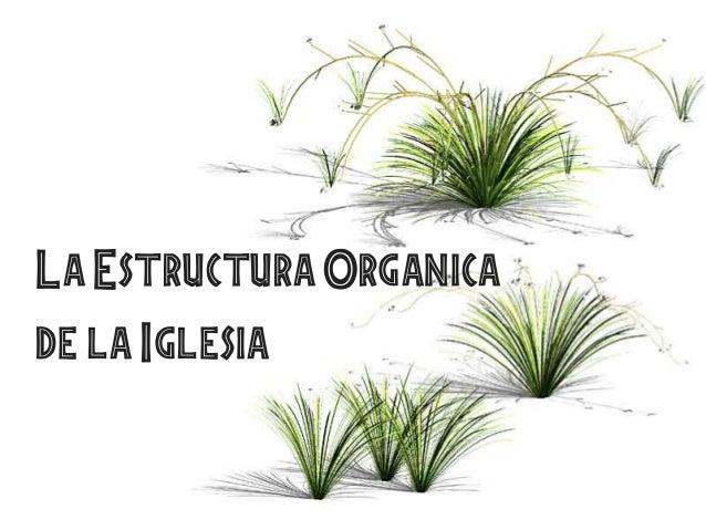 La Estructura Organicade la Iglesia