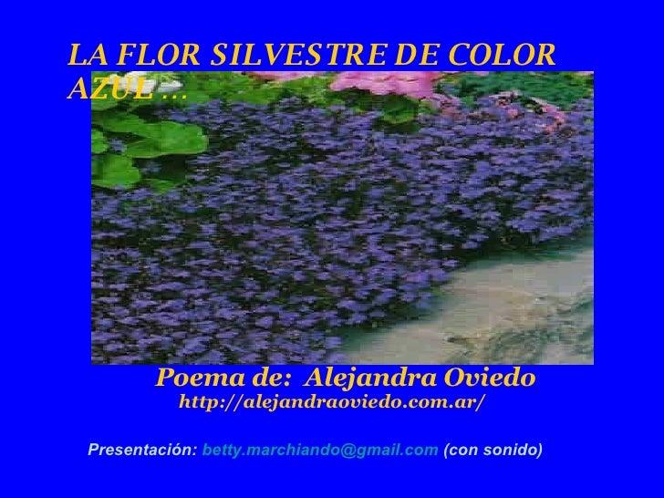 LA FLOR SILVESTRE DE COLOR AZUL … Poema de:  Alejandra Oviedo http://alejandraoviedo.com.ar/  Presentación:  [email_addres...