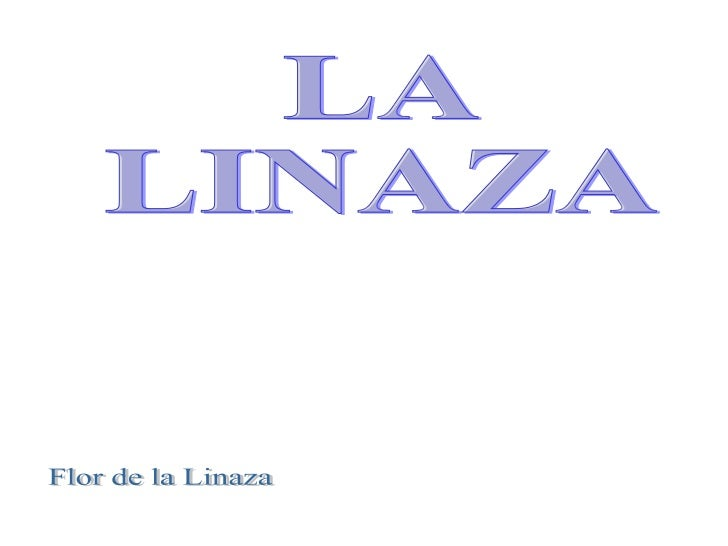 LA  LINAZA  Flor de la Linaza