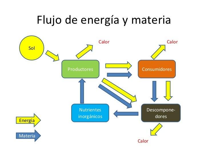 Fotosintesis y respiracion celular pdf 61