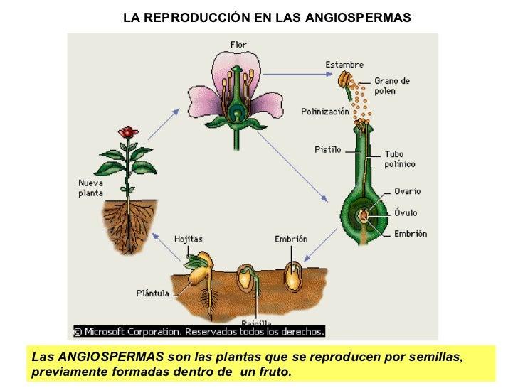 La Reproduccion De Los Vegetales