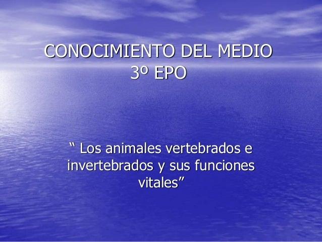 """CONOCIMIENTO DEL MEDIO3º EPO"""" Los animales vertebrados einvertebrados y sus funcionesvitales"""""""