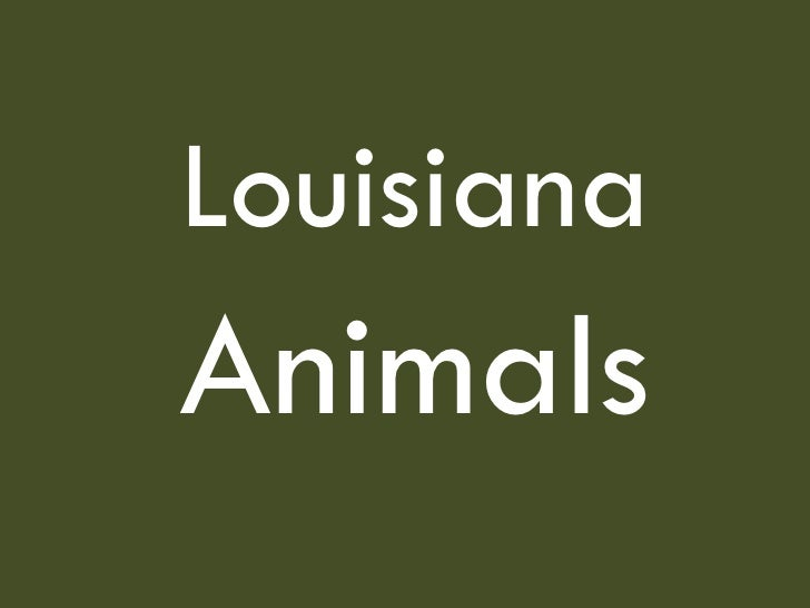 Louisiana   Animals