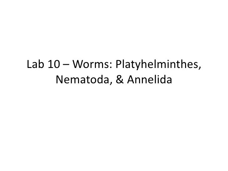 Lab 10 – worms