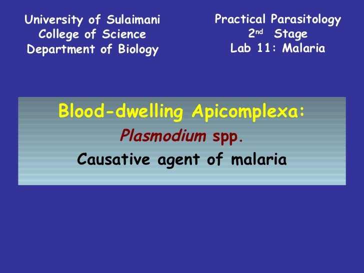 Practical Parasitology 2 nd   Stage Lab 11: Malaria University of Sulaimani College of Science Department of Biology Blood...