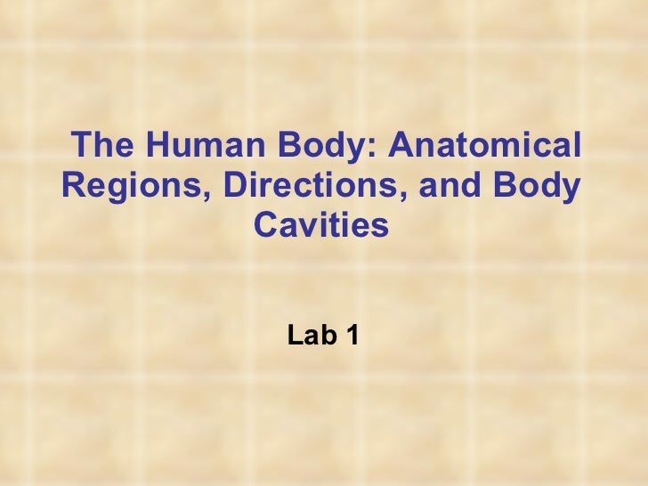 The Human Body: Anatomical Regions, Directions, and Body Cavities Lab 1