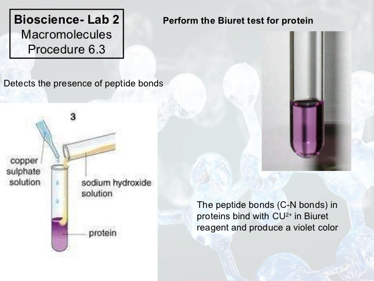 biuret testing in lab Bio 3a lab: biologically important molecules page 1 of 11 each testing for carbohydrates: is the site of action for the biuret test for protein.