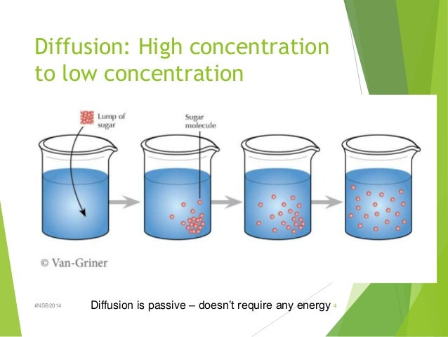lab report gas diffusion The processes of diffusion and osmosis account for much of the passive movement of molecules at the cellular level in this laboratory lab skills closer look.