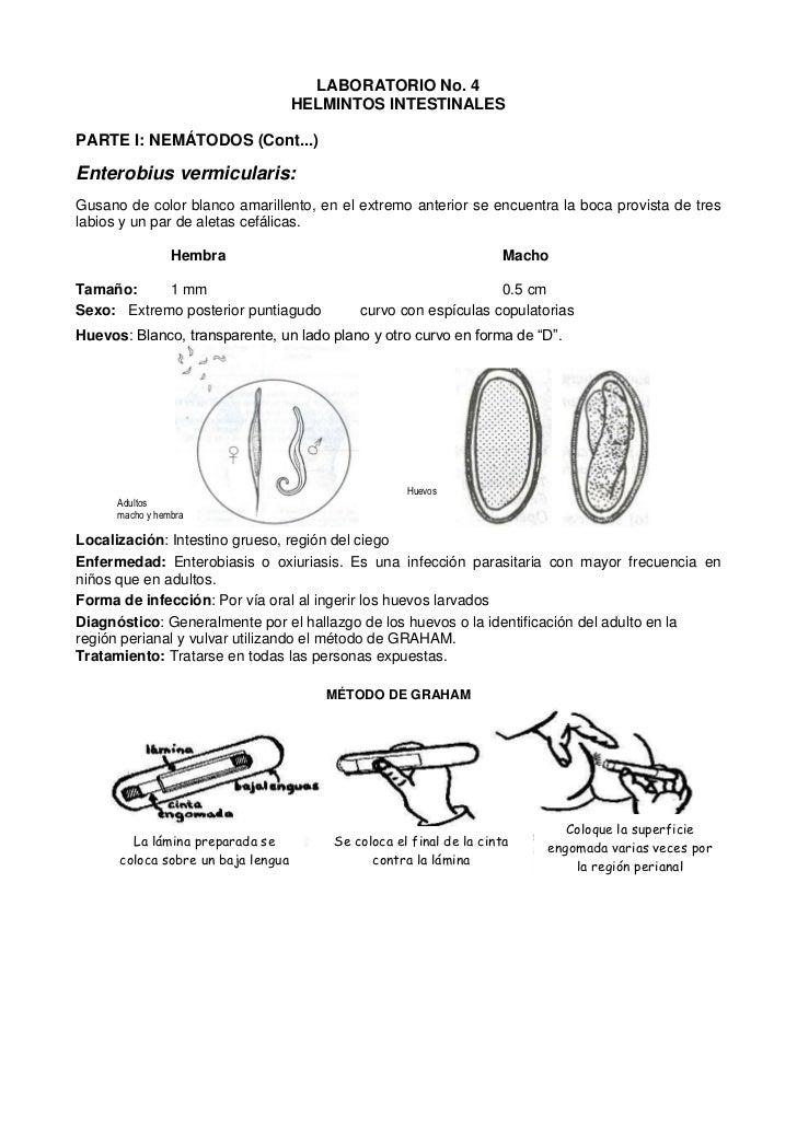 Lab #4 helmintos intestinales iii