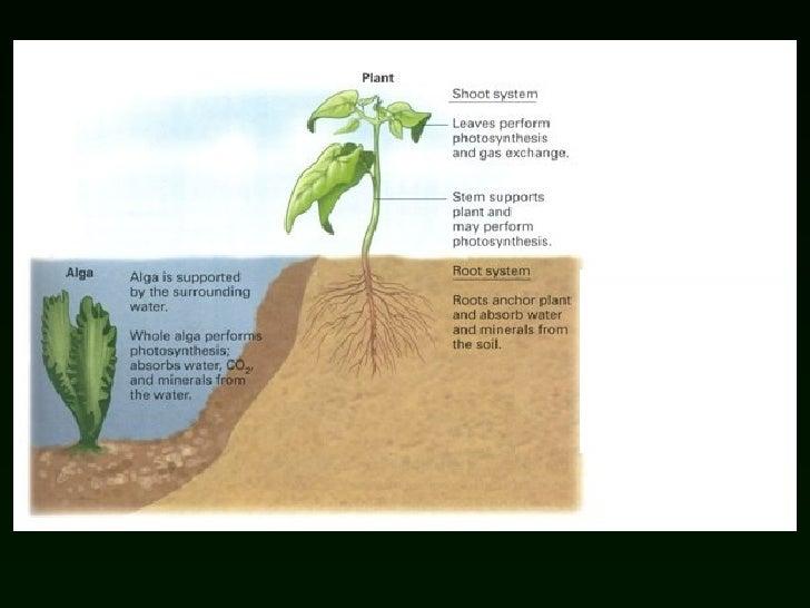 Lab 5 origin of plants for Soil and its origin
