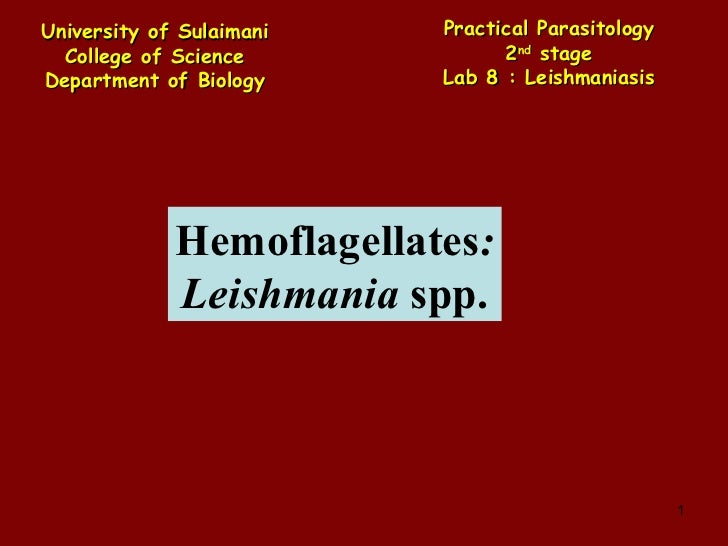 Hemoflagellates : Leishmania  spp. University of Sulaimani College of Science Department of Biology Practical   Parasitolo...