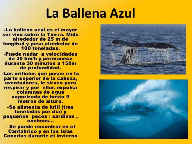 ballena azul - photo #31