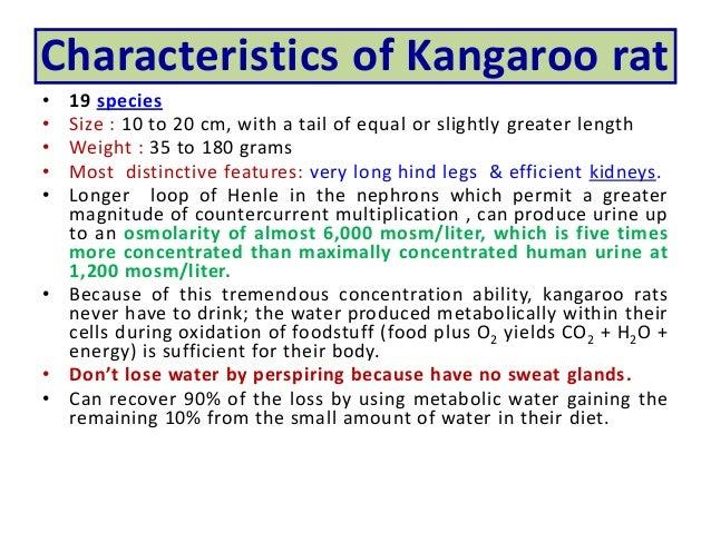 characteristics of kangaroos Here are some of the most wonderful kangaroo facts for kids including kangaroo habitat, diet, and reproduction kangaroo belongs to the family of macropodidae kangaroos are generally classified into three subspecies namely red kangaroo, antilopine kangaroo, eastern grey kangaroo, and western grey kangaroo.