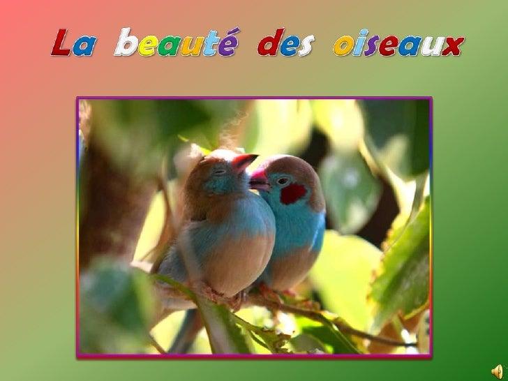 La beauté des  oiseaux<br />