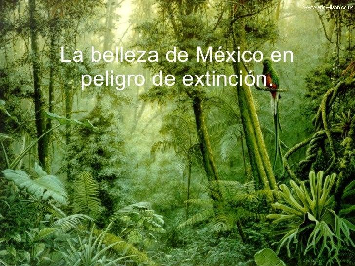 La belleza de México en peligro de extinción.