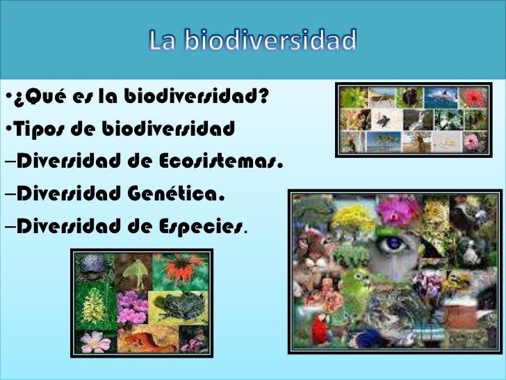 •¿Qué es la biodiversidad?•Tipos de biodiversidad–Diversidad de Ecosistemas.–Diversidad Genética.–Diversidad de Especies.