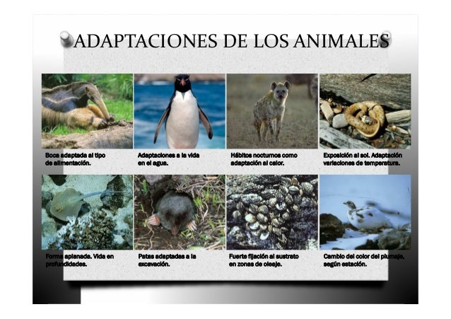 adaptaciones de los animales boca adaptada al tipo de alimentación