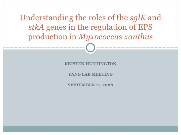 KRISTEN HUNTINGTON YANG LAB MEETING SEPTEMBER 11, 2008 Understanding the roles of the  sglK  and  stkA  genes in the regul...