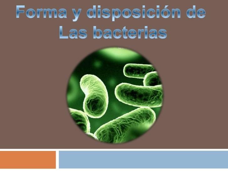 Microorganismos      Procariotas    Amplia variedadMúltiples clasificacionesMúltiples clasificaciones