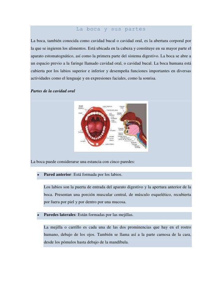 La boca y sus partes<br />La boca, también conocida como cavidad bucal o cavidad oral, es la abertura corporal por la que ...