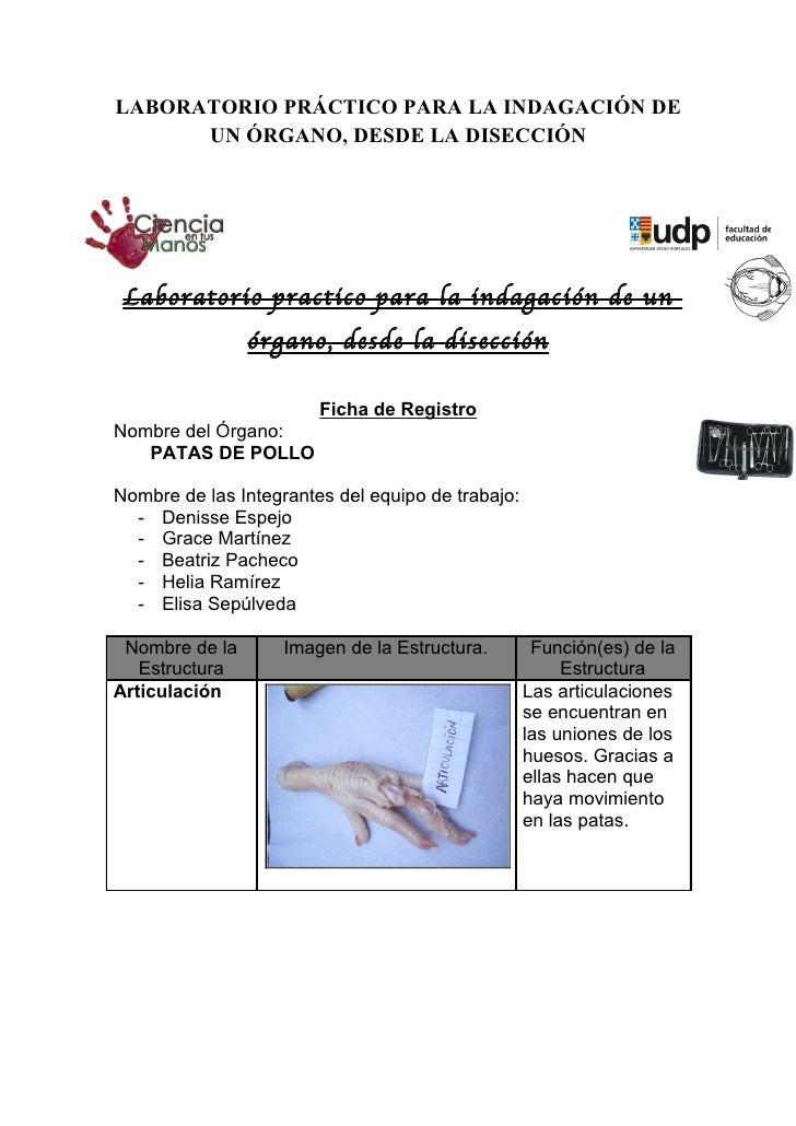 LABORATORIO PRÁCTICO PARA LA INDAGACIÓN DE      UN ÓRGANO, DESDE LA DISECCIÓN Laboratorio practico para la indagación de u...