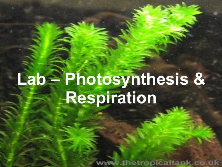 photsynthesis quiz Photosynthesis quiz.