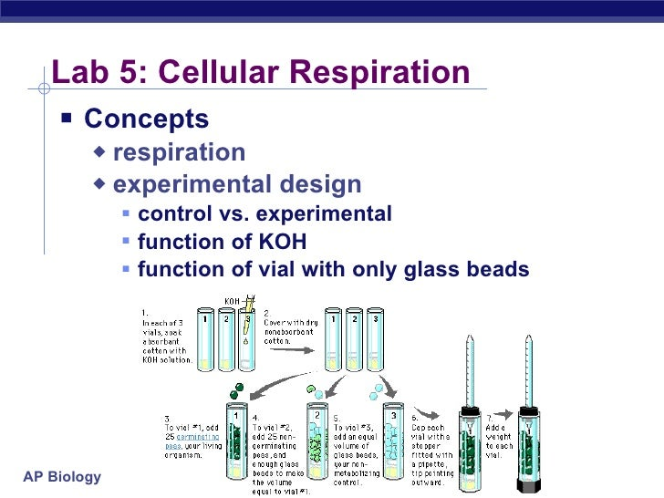 lab report over cellular respiration and Cellular respiration lab report cellular respiration lab initial measurements from our control data and subtracted it for the change in respiration over time.