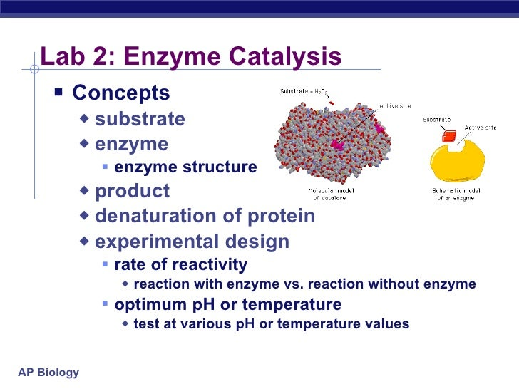 lab reports on enzymes Investigating the properties and functions of the enzyme catalase.