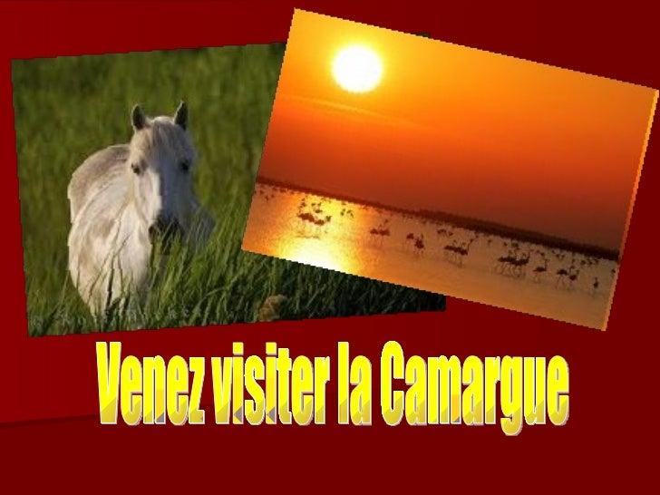 Venez visiter la Camargue