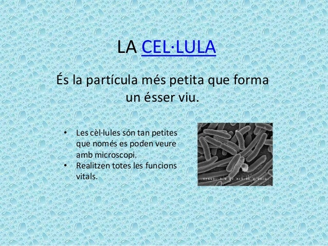 LA CEL·LULAÉs la partícula més petita que forma             un ésser viu. • Les cèl·lules són tan petites   que només es p...
