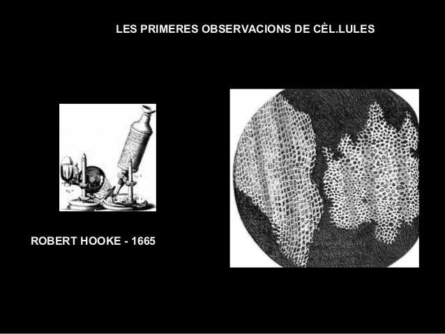 LES PRIMERES OBSERVACIONS DE CÈL.LULES ROBERT HOOKE - 1665