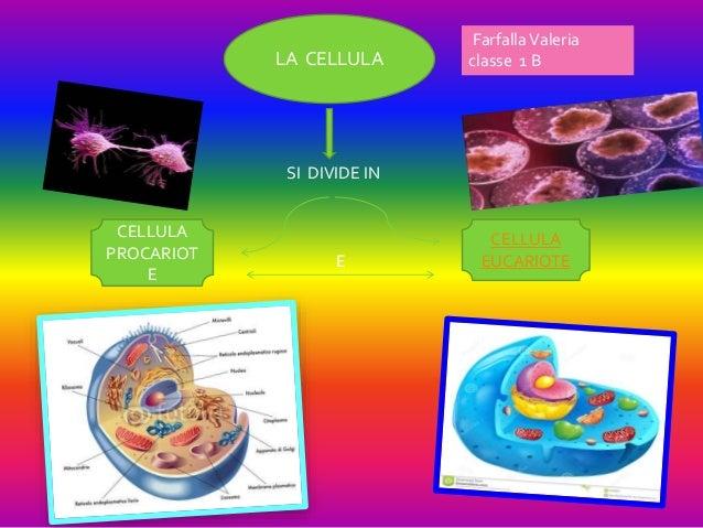 LA CELLULA CELLULA EUCARIOTE CELLULA PROCARIOT E E SI DIVIDE IN FarfallaValeria classe 1 B