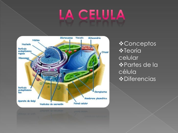 ConceptosTeoríacelularPartes de lacélulaDiferencias