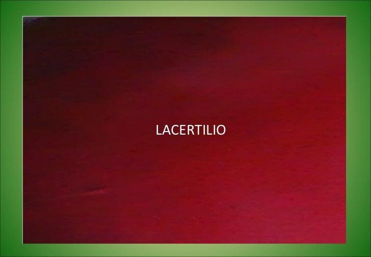 LACERTILIO