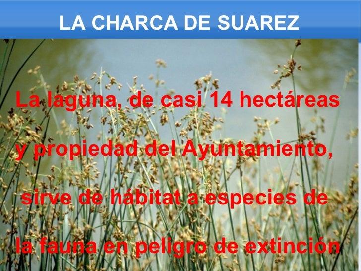 LA CHARCA DE SUAREZ La laguna, de casi 14 hectáreas y propiedad del Ayuntamiento, sirve de hábitat a especies de la fauna ...