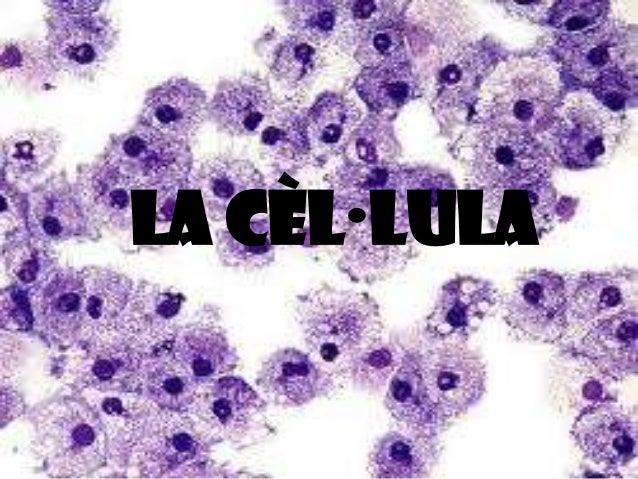 La cèl·lula