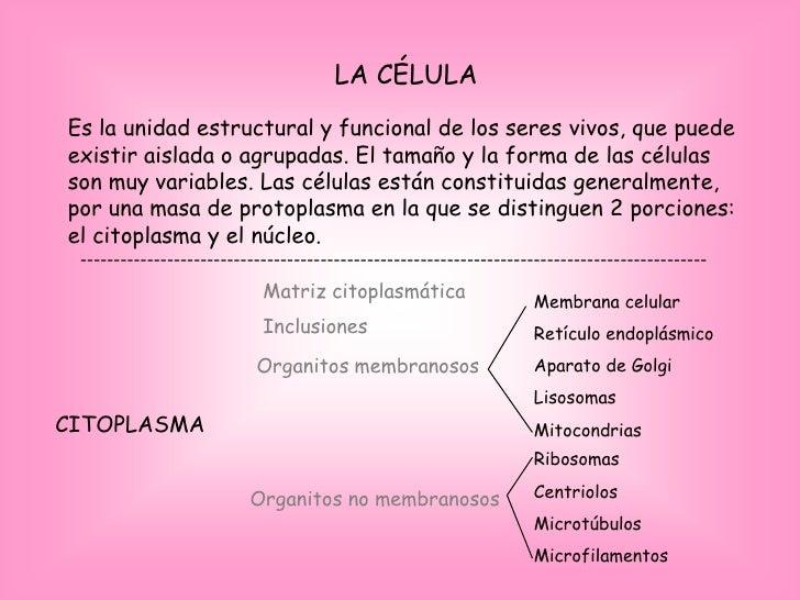 LA CÉLULA Es la unidad estructural y funcional de los seres vivos, que puede existir aislada o agrupadas. El tamaño y la f...