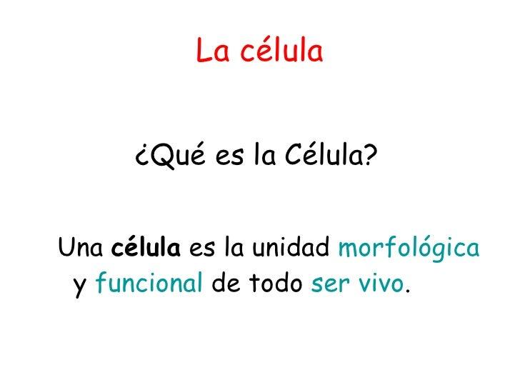 La célula <ul><li>¿Qué es la Célula? </li></ul><ul><ul><li>Una  célula  es la unidad  morfológica  y  funcional  de todo  ...