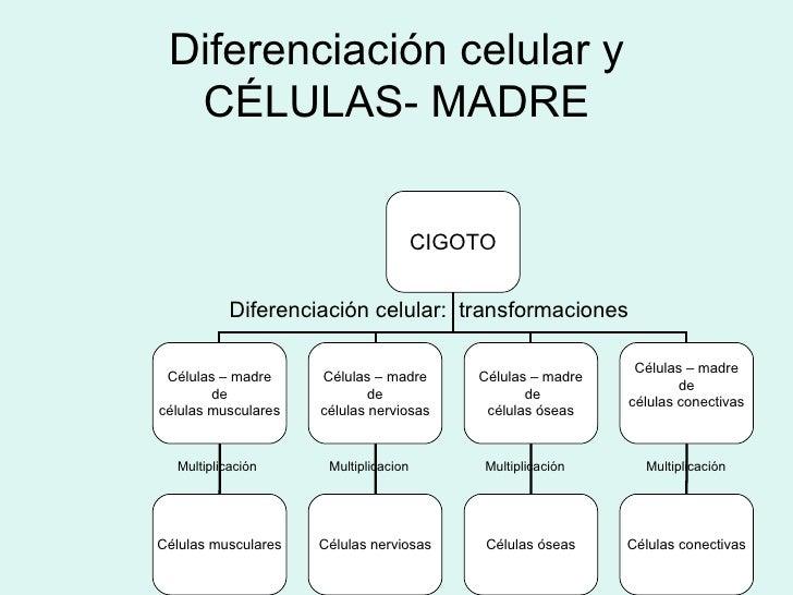 cilios y flagelos pdf