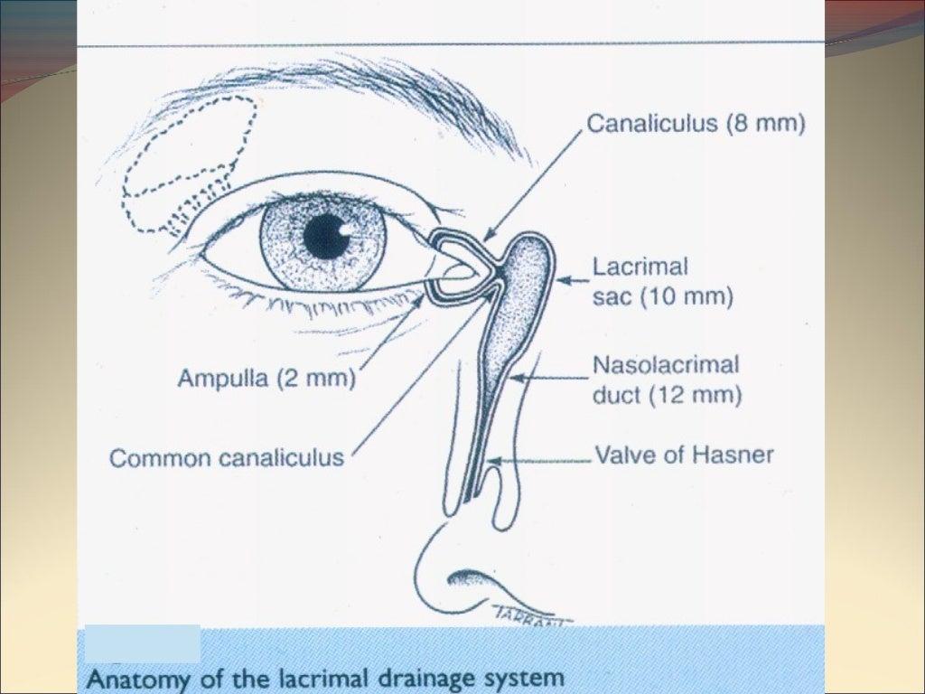 Lacrimal system anatomy