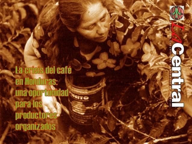 Cooperativas De Cafe Honduras