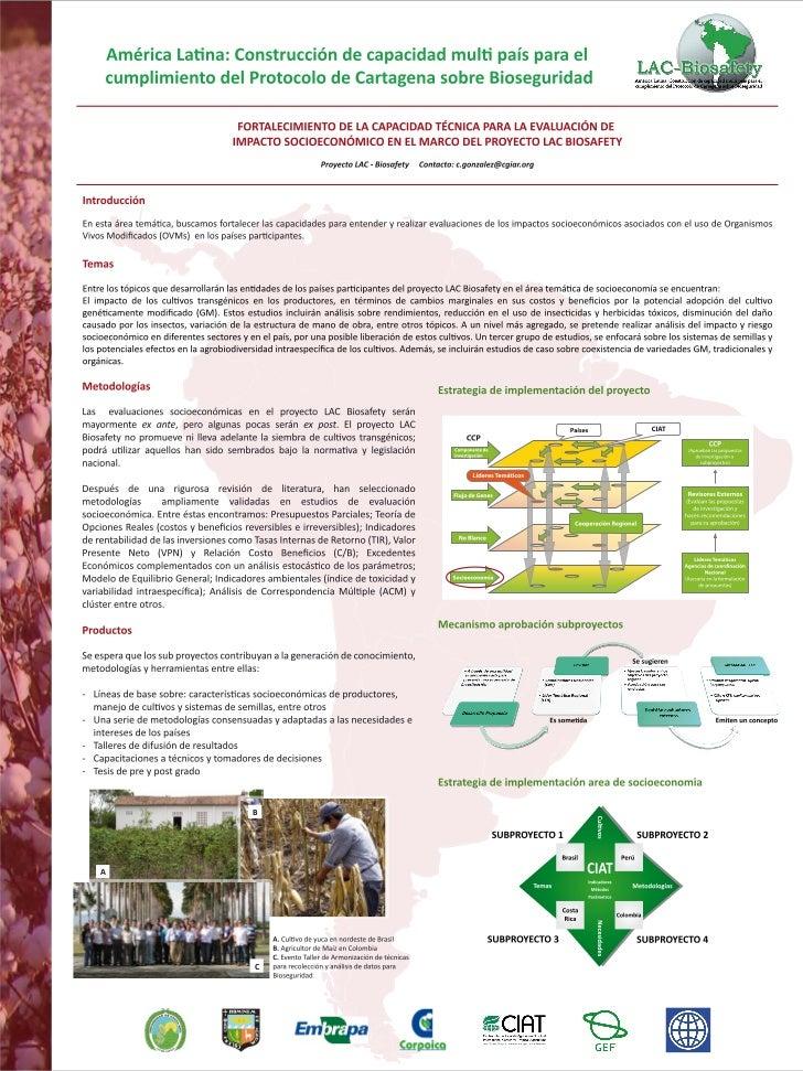 Poster40: America Latina: Construcción de la capacidad mullti pais para el cumplimiento del protocolo de Cartagena sobre bioseguridad. Fortalecimiento de la capacidad técnica para la evaluación de impacto socioeconomico en el marco del proyecto LAC Bio