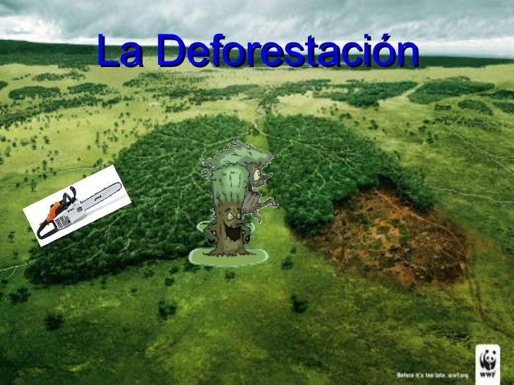 La deforestacin